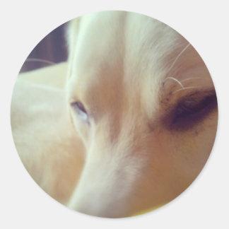 Sleepy Labrador Classic Round Sticker