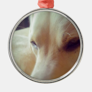 Sleepy Labrador Silver-Colored Round Decoration