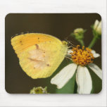 Sleepy Orange Butterfly Mouse Pad