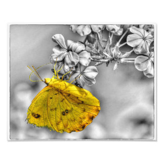 Sleepy Orange Butterfly Pop Photo Print