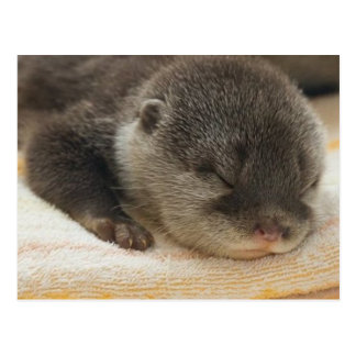 Sleepy Otter Postcard