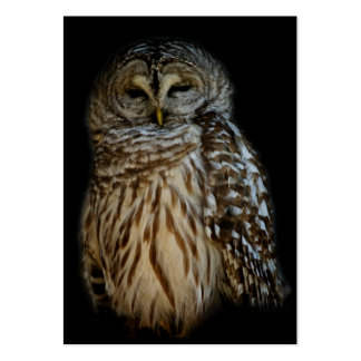 Sleepy Owl Mini Print Pack Of Chubby Business Cards