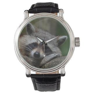 Sleepy Raccoon Watch