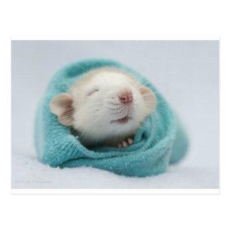 Sleepy Rat Postcard