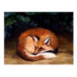 Sleepy Red Fox Animal Art Postcard