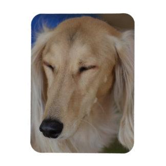 Sleepy Saluki Dog Rectangular Photo Magnet