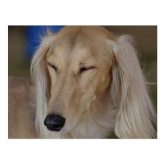 Sleepy Saluki Dog Postcard