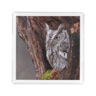 Sleepy Screech Owl Acrylic Tray