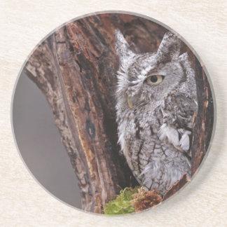 Sleepy Screech Owl Coaster