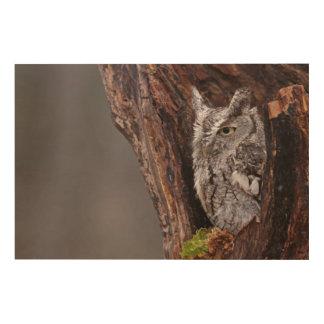 Sleepy Screech Owl Wood Wall Decor