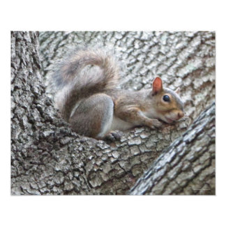 Sleepy Squirrel Photo Print