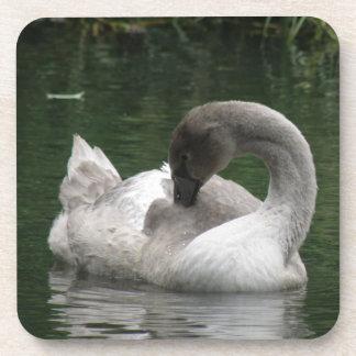 Sleepy Swan Cork Coaster