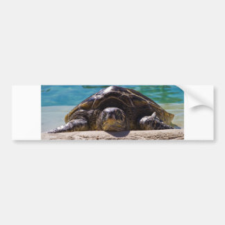Sleepy Turtle Bumper Sticker