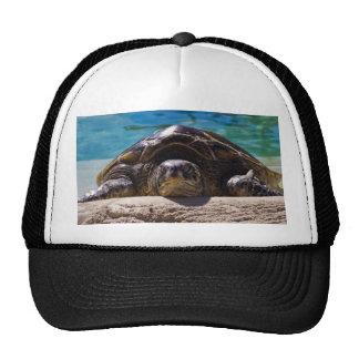 Sleepy Turtle Cap