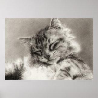Sleepyhead Main Coon Cat Poster