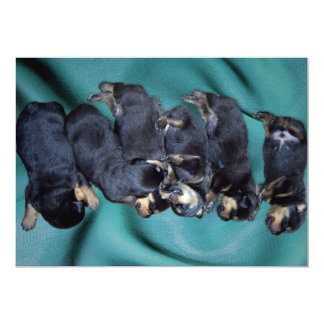 sleepyhead rottweiler puppies 13 cm x 18 cm invitation card