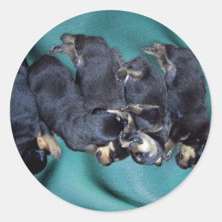 sleepyhead rottweiler puppies classic round sticker