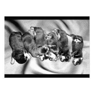 sleepyhead rottweiler puppies personalized invitation
