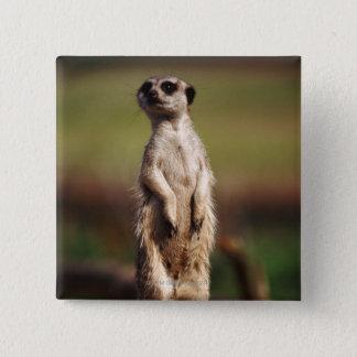 slender-tailed meerkat 15 cm square badge