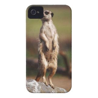 slender-tailed meerkat iPhone 4 Case-Mate case