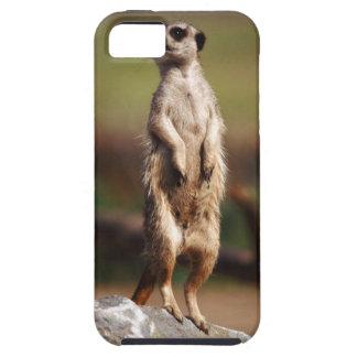 slender-tailed meerkat iPhone 5 case