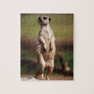 slender-tailed meerkat jigsaw puzzle