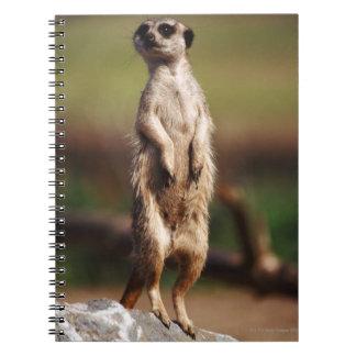 slender-tailed meerkat notebooks