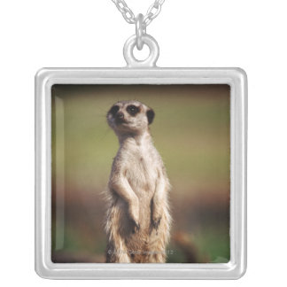 slender-tailed meerkat silver plated necklace