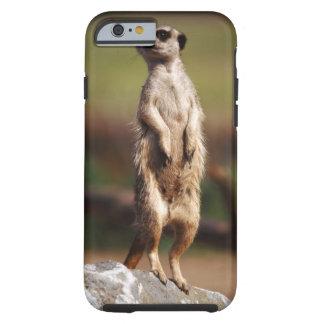 slender-tailed meerkat tough iPhone 6 case
