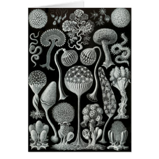 Slime Moulds Greeting Card