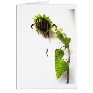 Slip Away Greeting Card