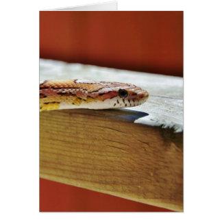 Slithering Red Corn Snake Card