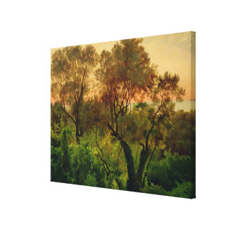 Slope with Olive Trees Canvas Print
