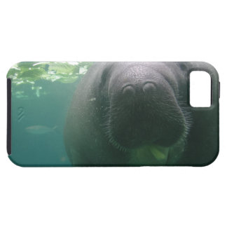 Sloppy Manatee iPhone 5 Tough Case For The iPhone 5