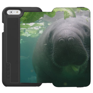 Sloppy Manatee iPhone 6 Watson Incipio Watson™ iPhone 6 Wallet Case
