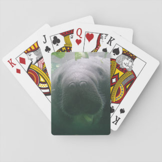 Sloppy Manatee Card Decks