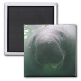 Sloppy Manatee square or round magnet