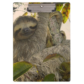 sloth clipboard