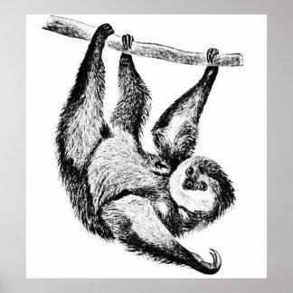 Sloth Drawing Illustration Poster