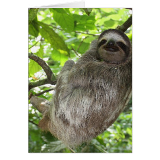 Sloth in Tree Greeting Cards