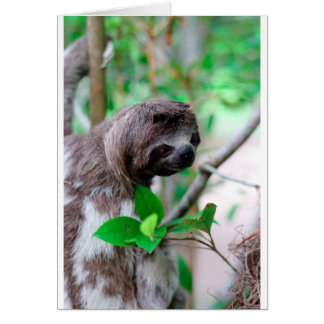 Sloth in tree Nicaragua Card