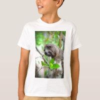 Sloth in tree Nicaragua