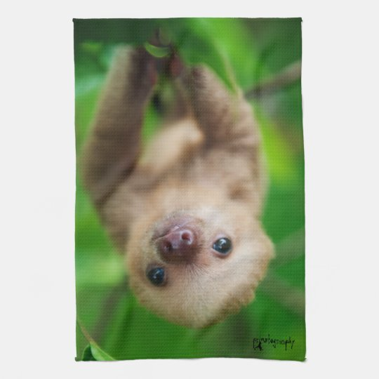 Sloth Kitchen Towel