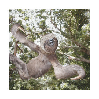 Sloth Love Canvas Prints
