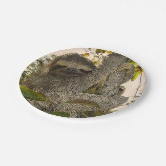 sloth paper plate