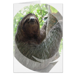 Sloth Photo Design Greeting Card
