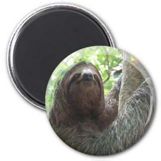 Sloth Photo Design Magnet