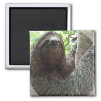 Sloth Photo Design Square Magnet