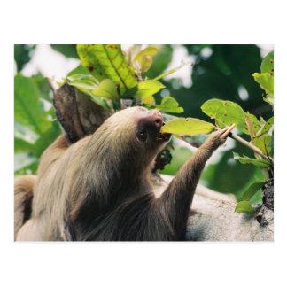 Sloth Post Card
