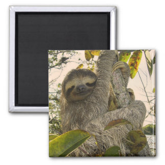 sloth square magnet